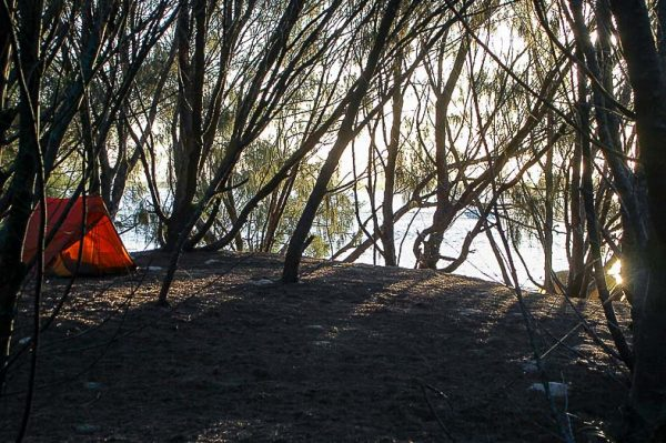 Camp site under casuarinas South Stradbroke Island Moreton Bay