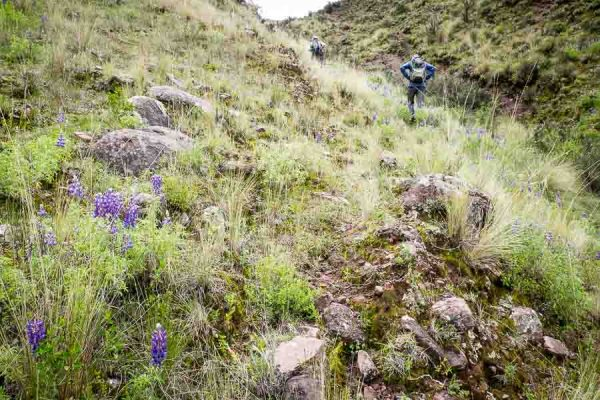 Walkers approaching summit of hill above Tomoc and Cusco, Peru