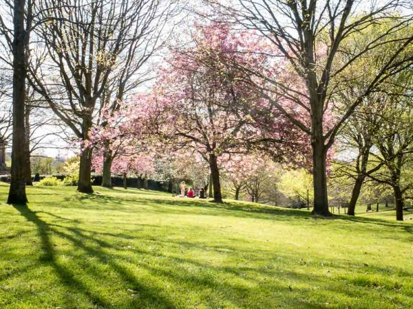 Spring colour, Nottingham Arboretum, U